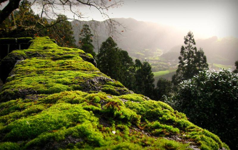 Pedras Galego Sao Miguel Azores