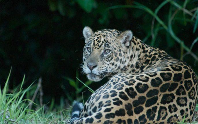 inkanatura-travel-jaguar