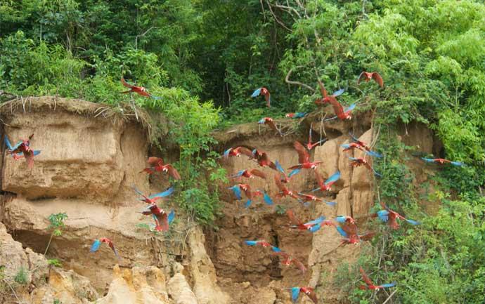 inkanatura-travel-macaws