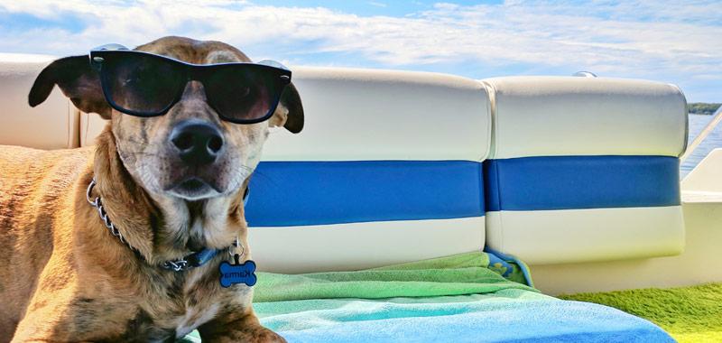 5 Consejos para viajar con mascotas
