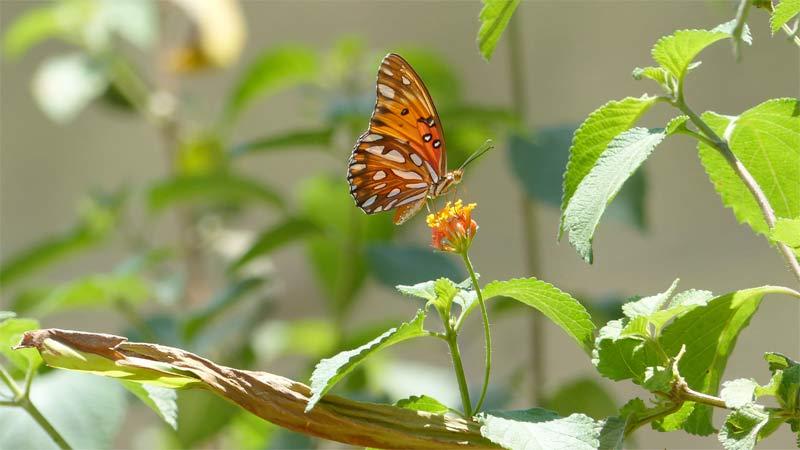 costa rica jardin mariposas