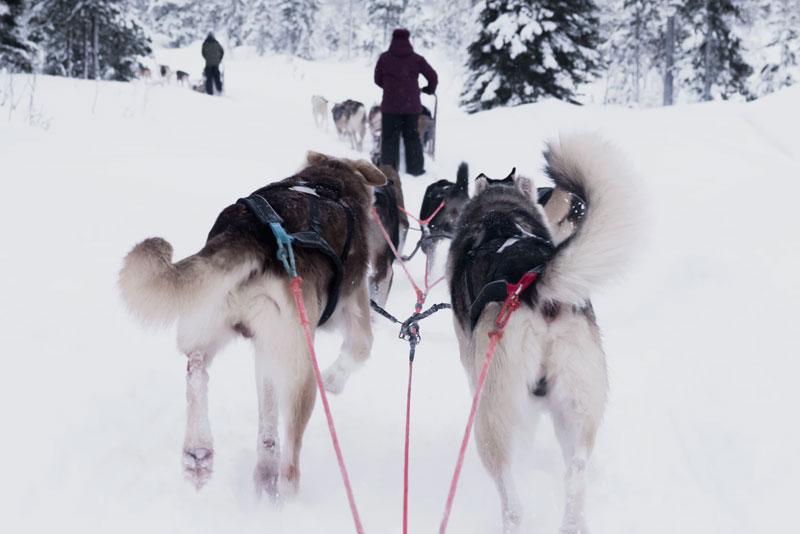 huskies huskypoint