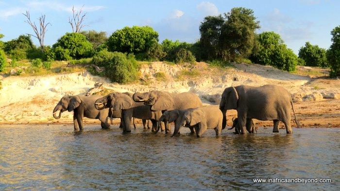 Parque Nacional de Chobe y el cuadripunto africano – En África y más allá