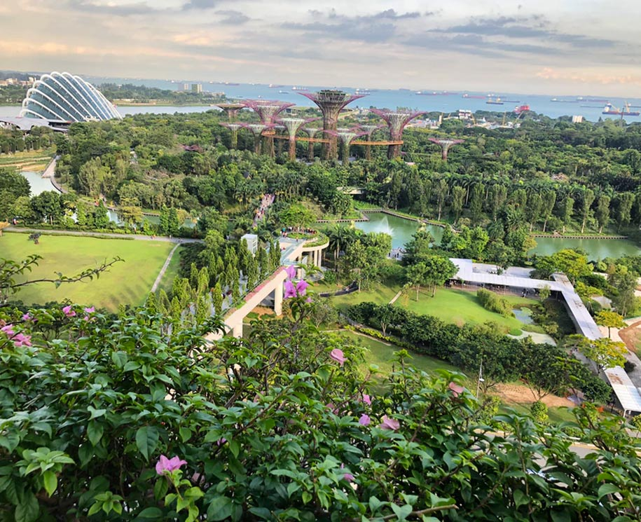 Explore Gardens by the Bay en la noche
