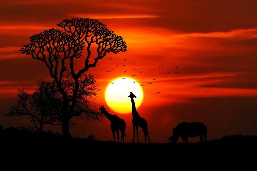 Descubra las eco-logias de lujo inspiradoras de África, en África