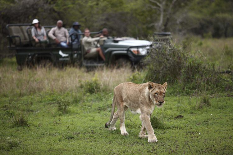 8 animales que puedes encontrar en Phinda Private Game Reserve