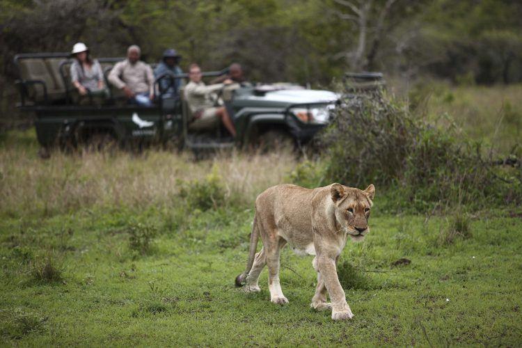 8 animales que puedes encontrar en Phinda Private Game Reserve