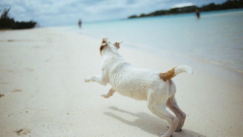 12 playas para perros en Florida