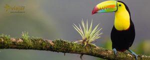 Guia De Costa Rica