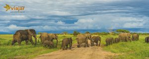 Safari Africa Oriental