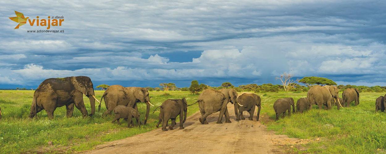 Guía para el mejor Safari en África Oriental