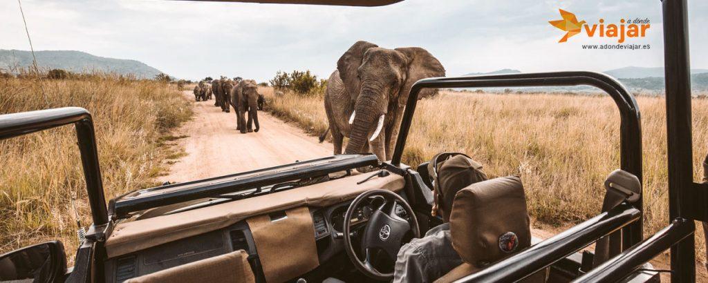 Safari Por Africa