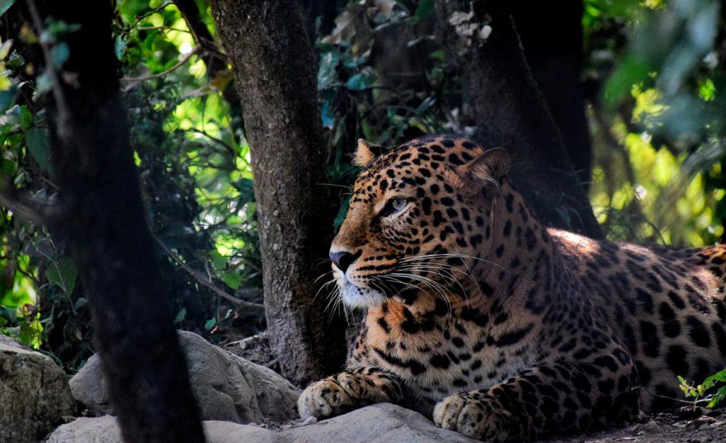 Reserva de tigres de Corbett