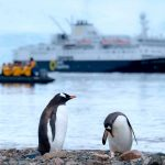 Crucero por la Antártida: una experiencia de viaje verdaderamente notable