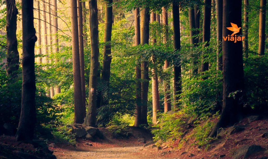 El Bosque de la Hoja, una excursión que podría cambiarte la vida